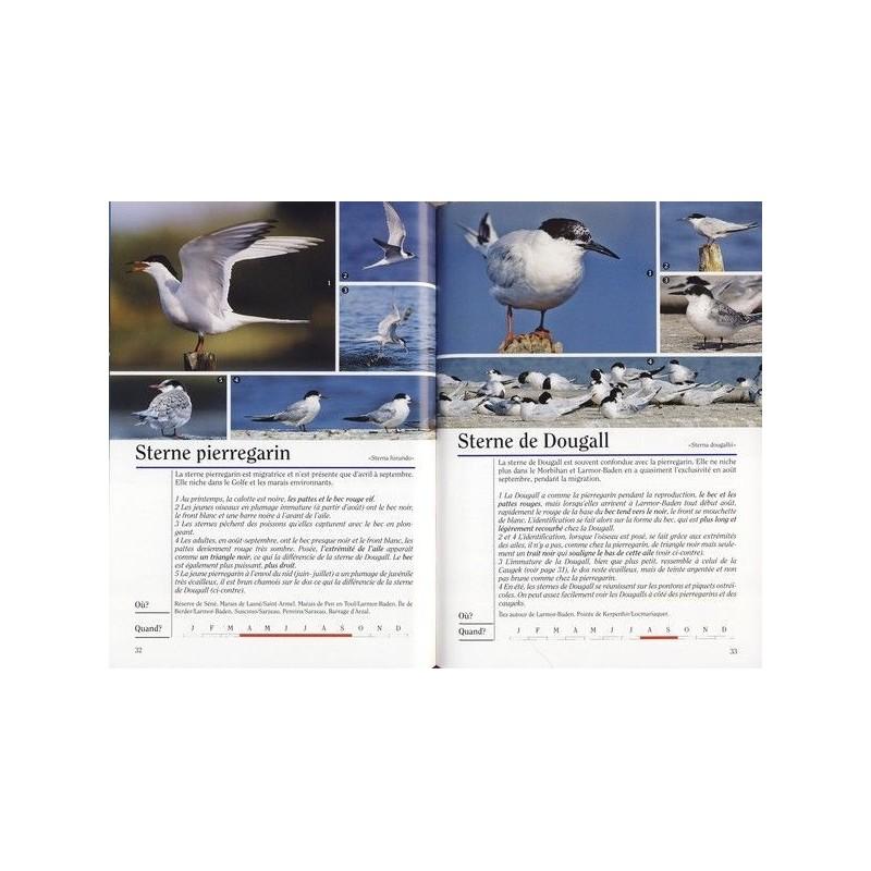 réservés ornithologiques golfe du morbihan