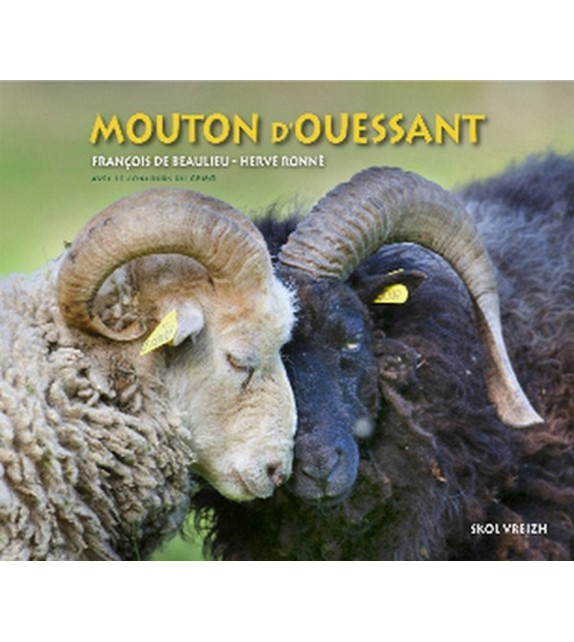 LE MOUTON D'OUESSANT - Patrimoine vivant de la Bretagne